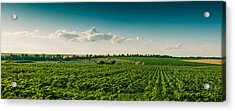 Agriculture Field And Perfect Sky Acrylic Print by Daniel Barbalata