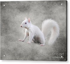 Albino Squirrel Acrylic Print by Jai Johnson