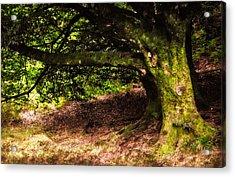 Alive Memory Of Thetrees. Glendalough. Ireland Acrylic Print by Jenny Rainbow