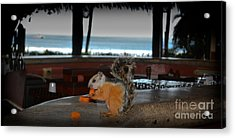 All Inclusive Squirrel Acrylic Print by Gary Keesler
