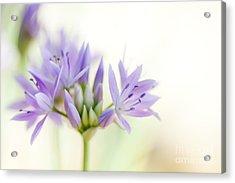 Allium Unifolium Eros Acrylic Print by Tim Gainey