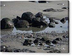 Along A Maine Beach Acrylic Print by Eunice Miller
