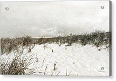 Along The Cape Cod National Seashore Acrylic Print by Michelle Wiarda