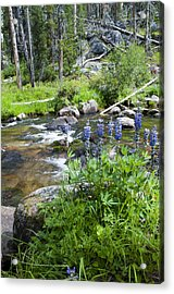 Along The River Acrylic Print by Fran Riley