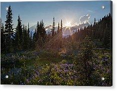 Alpine Meadow Sunrays Acrylic Print by Mike Reid