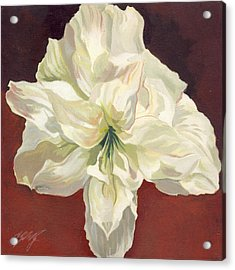 Amaryllis With Red Acrylic Print by Alfred Ng
