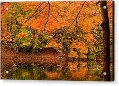 Amber Afternoon Acrylic Print by Lourry Legarde