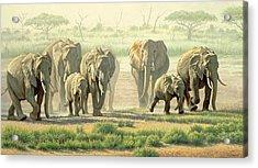 Amboseli Promenade Acrylic Print by Paul Krapf