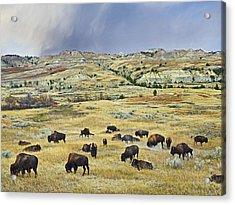American  Bison Herd Grazing Acrylic Print by Tim Fitzharris