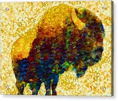 American Bison Acrylic Print by Jack Zulli