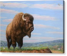 American Bison Acrylic Print by James W Johnson