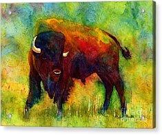 American Buffalo Acrylic Print by Hailey E Herrera