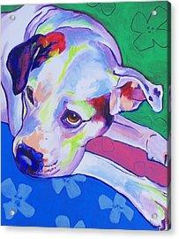American Bulldog - Raja Acrylic Print by Alicia VanNoy Call