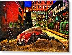 American Cockroach Acrylic Print by Bob Orsillo