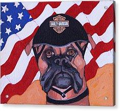 American Dawg Acrylic Print by Christina Hoffman