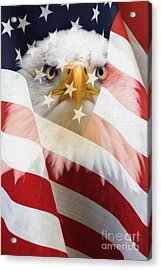 American Flag And Bald Eagle Montage Acrylic Print by Tim Gainey