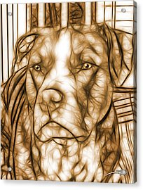 American Pit Bull - Sepia Sketch  Acrylic Print by Michael Spano