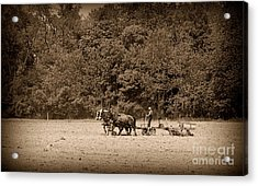 Amish Farmer Tilling The Fields In Black And White Acrylic Print by Paul Ward