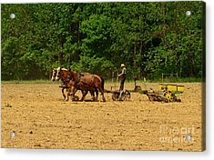 Amish Farmer Tilling The Fields Acrylic Print by Paul Ward