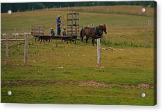 Amish Man And Two Sons On The Farm Acrylic Print by Dan Sproul