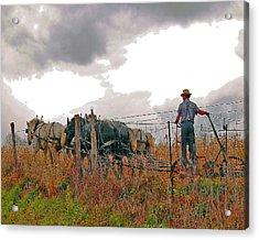 Amishman Driving Plow Acrylic Print by Brian Graybill