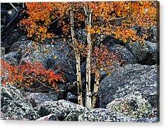 Among Boulders Acrylic Print by Chad Dutson