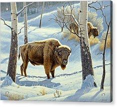Among The Aspens- Buffalo Acrylic Print by Paul Krapf