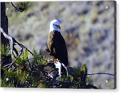 An Eagle In The Sun Acrylic Print by Jeff Swan