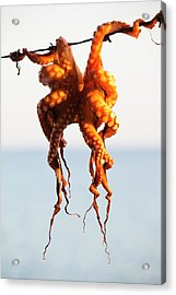 An Octopus Hung Up To Dry Acrylic Print by Ashley Cooper