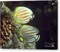 An Ornate Pair Acrylic Print by Bette Phelan