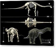 Anatomy Of A Titanosaur Acrylic Print by Rodolfo Nogueira