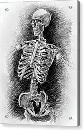 Anatomy Study Mister Skeleton Acrylic Print by Irina Sztukowski