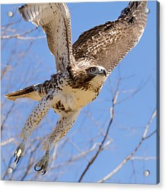 And Away I Go Square Acrylic Print by Bill Wakeley