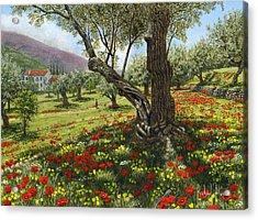 Andalucian Olive Grove Acrylic Print by Richard Harpum