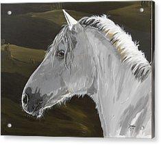 Andalusian Foal Acrylic Print by Janina  Suuronen