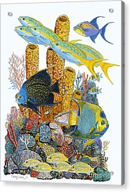Angel Fish Reef Acrylic Print by Carey Chen