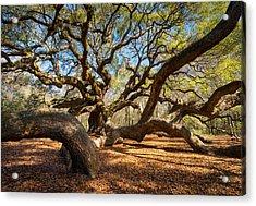 Angel Oak Tree Charleston Sc Acrylic Print by Dave Allen