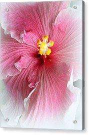 Angel Of Paradise Acrylic Print by  The Art Of Marilyn Ridoutt-Greene