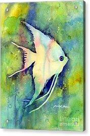 Angelfish I Acrylic Print by Hailey E Herrera