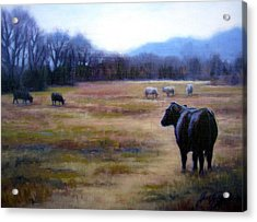 Angus Steer In Franklin Tn Acrylic Print by Janet King
