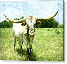 animals - cows -Longhorn in Summer Pasture Acrylic Print by Ann Powell