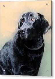 animals - dogs- Loyal Friend Acrylic Print by Ann Powell