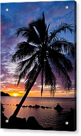 Anini Palm Acrylic Print by Adam Pender