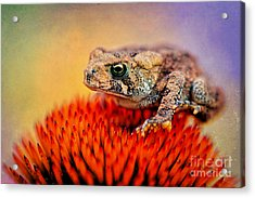 Another Fine Mess Acrylic Print by Lois Bryan