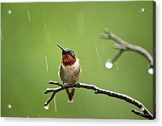 Another Rainy Day Hummingbird Acrylic Print by Christina Rollo