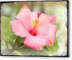 Antique Hibiscus Acrylic Print by Carol Groenen