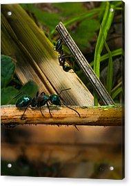 Ants Adventure 2 Acrylic Print by Bob Orsillo