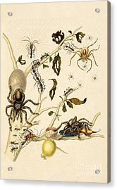 Ants Spiders Tarantula And Hummingbird Acrylic Print by Getty Research Institute