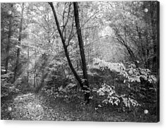 Appalachian Mountain Trail In Black And White Acrylic Print by Debra and Dave Vanderlaan