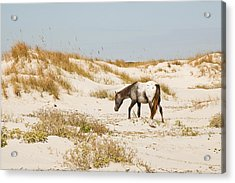 Appaloosa Beach Acrylic Print by Barbara Kraus - Northrup